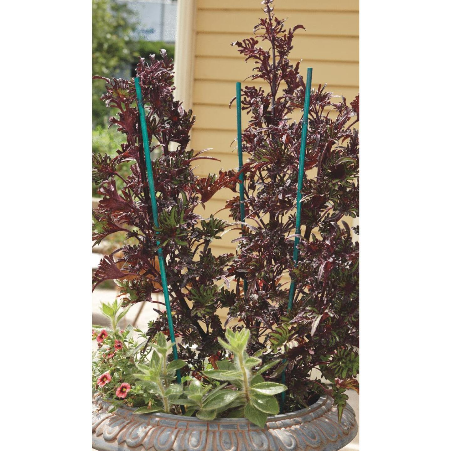 Bond 4 Ft. Green Bamboo Plant Stakes (25-Pack) Image 3